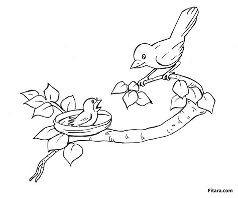 free coloring pages of baby birds baby bird coloring page free draw to color