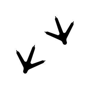 Resale Home Decor by Keywords Animal Tracks Animals Bird Tracks Birds