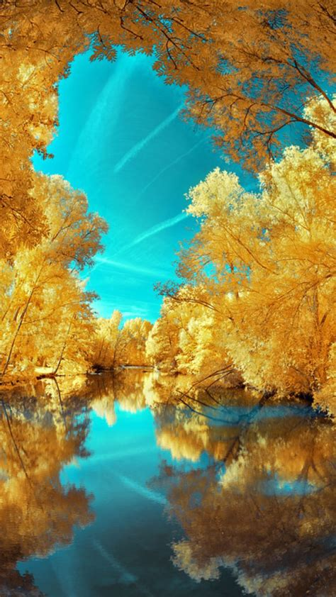 wallpaper trees gold yellow gold trees wallpaper free iphone wallpapers