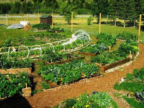 backyard permaculture design permaculture garden greenmylife anyone can garden