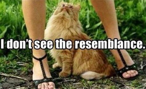 Pussy Cat Meme - lol cats 50 awesomely funny cat photos to crack you up