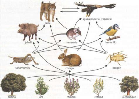 cadenas troficas bosque tema 47b ecolog 237 a poblaciones comunidades y