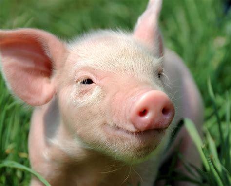 imagenes de animales uñas свиные коллагеновые белки agrosmak