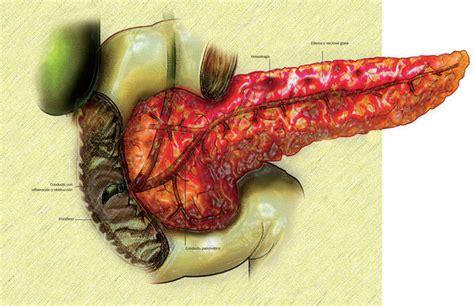 do dogs gallbladders gallbladder relief for dogs gallbladder repairing