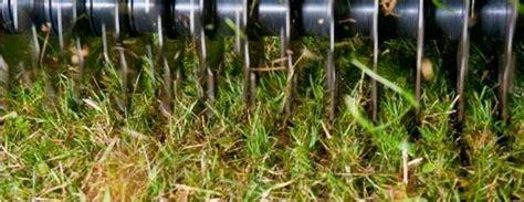 tappeti erbosi gestione e manutenzione tappeto erboso