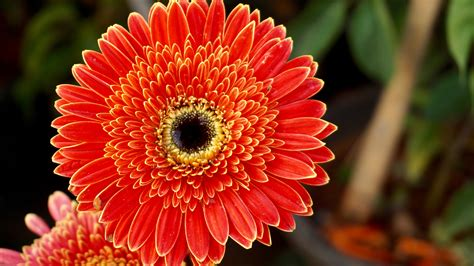 flower images wallpaper gerbera flowers orange flowers hd 5k flowers