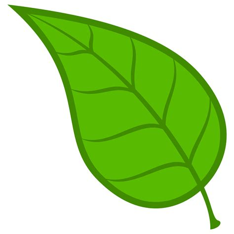 best free vector best free leaf vector drawing image