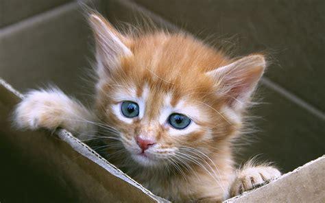 in casa gatto in casa un nuovo arrivo in famiglia animali pucciosi
