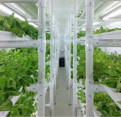 hydroponic container gardening 1000 images about in thin air aeroponics on