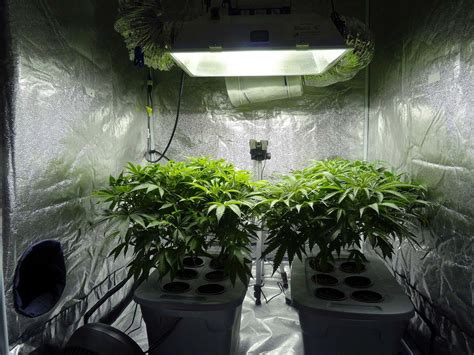 in states marijuana regulators target home cultivation