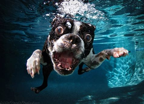all wallpapers funny dogs wallpapers funny dog picture wallpaperwallpaper background wallpaper