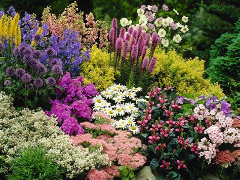 Flowering Garden Plants Perennial Plant World Of Flowering Plants