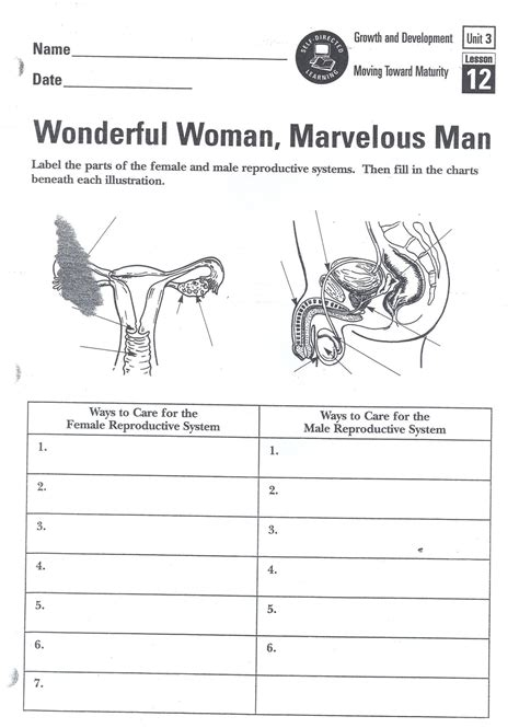 The Reproductive System Worksheet by Pregnancy Cycle Diagram Pregnancy Free Engine Image For