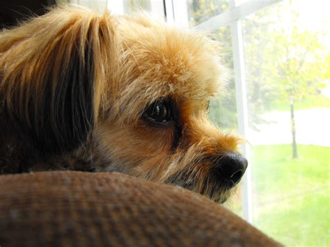 melanoma in dogs malignant melanoma in dogs ehow uk