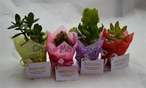 souvenirs cactus maipu recuerdos de matrimonio en ceramica blanca regalos ecol 243 gicos cactus maip 250