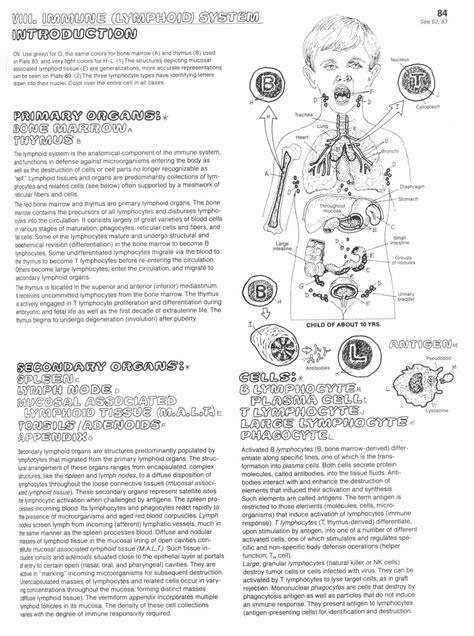 Immune System Worksheet