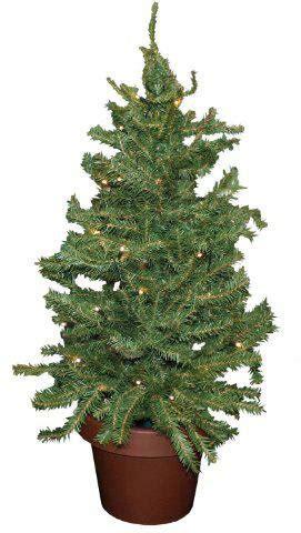 weihnachtsb ume im topf weihnachtsbaum im topf ab 6 99 jetzt bei preis de kaufen