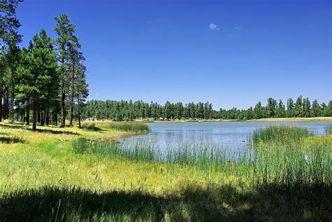 Kaibab National Forest - Unit 8 | Flickr - Photo Sharing!