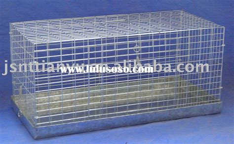 rabbit tattoo pen for sale pigeon cage quotes