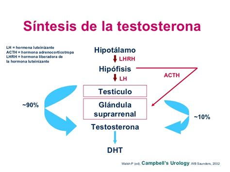 5ar treatment 5ar y dht lustytoys com
