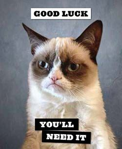 Angry Cat Good Meme - good luck you ll need it grumpy cat humor pinterest