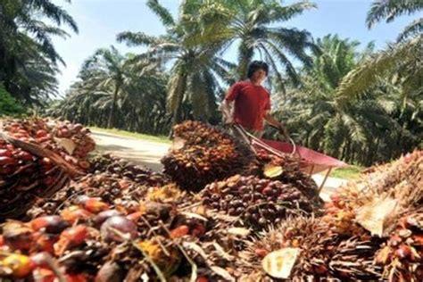 Minyak Cpo Kelapa Sawit proyeksi produksi turun harga melambung koran bisnis