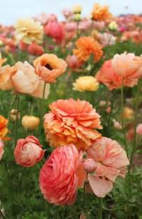 coral colored flowers 25 best ideas about flowers on beautiful