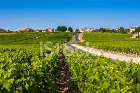vineyard landscape near bordeaux stock photos