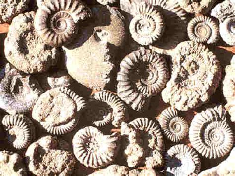 exploring  importance  fossils