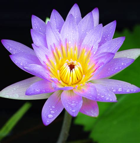 purple lotus doulas pregnancy birth and postpartum services