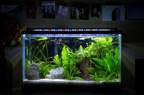 aquarium design exle planted tank heavily planted betta tank by dan adams