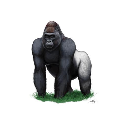 gorilla clipart gorilla clipart hq png image freepngimg