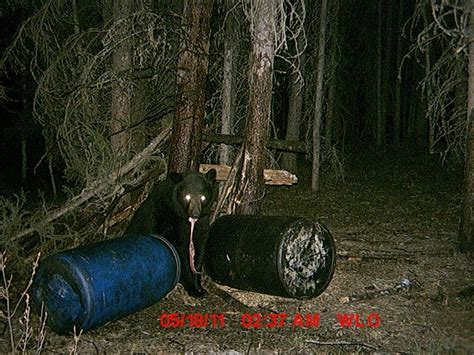 How To Show Dimensions wizard lake outfitting photo gallery alberta trail camera