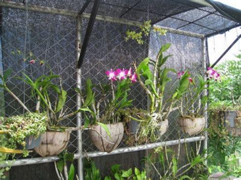 menanam anggrek  sabut kelapa