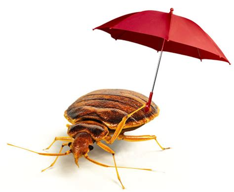 standard pesticides failing  bed bugs  industry