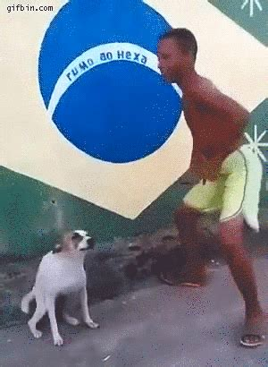 Dancing Dog Meme - dog gif find share on giphy