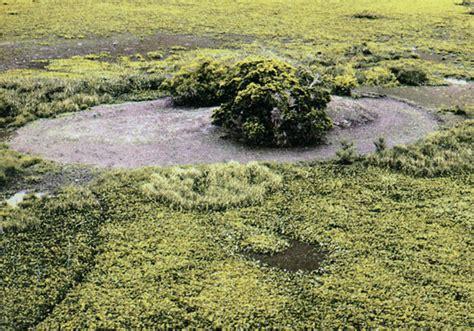 Resumenes U Lima res 250 menes de antropolog 237 a uba americana 1 andrade lima