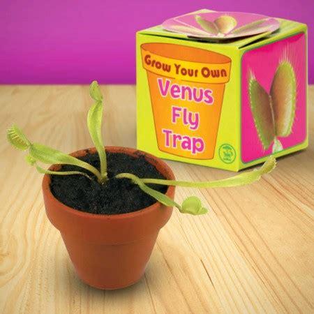 grow   venus fly trap hgl tobar