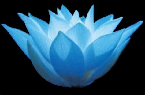 meaning of blue lotus flower lotus flowers god is a real god