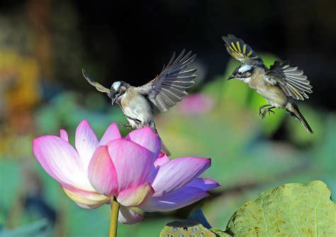 colibr fondos de pantalla 1920x1200 432 hummingbirds full hd fondo de pantalla and fondo de