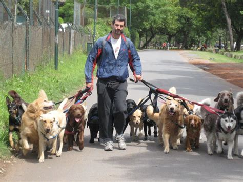 lots of dogs walking lots of dogs walking the