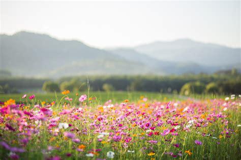 bach flower remedies  energy medicine  emotional
