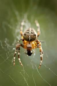 Renton Indoor Garden - local news there aren t more spiders they re just bigger and mature seattle times newspaper