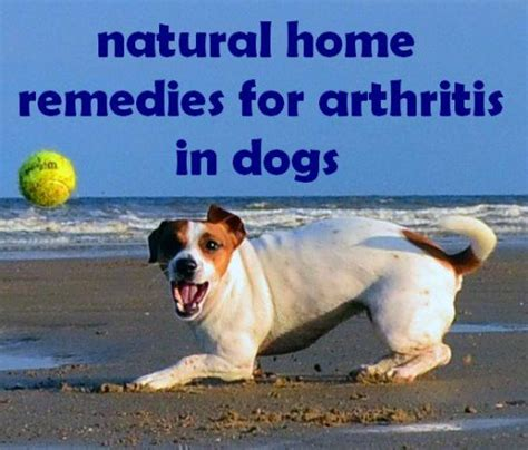 arthritis in dogs treatment home remedies symptoms