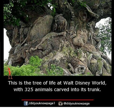Tree Trunks Meme - tree trunks meme tree trunk memes tree trunk pictures