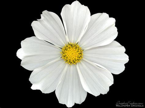 Simple Flower simple white flower swittersb exploring