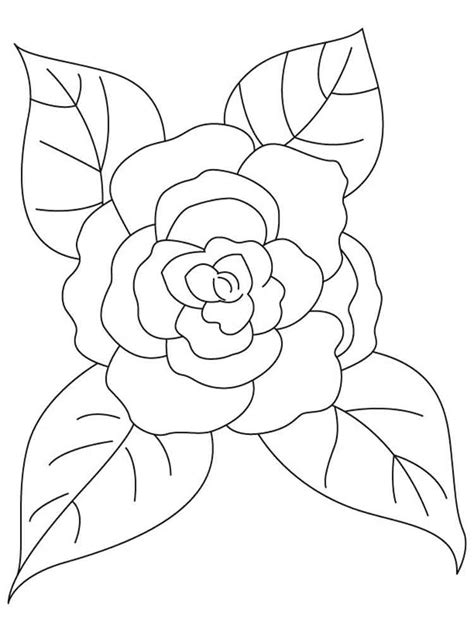 Camellia Flower Coloring Page | camellia flower coloring pages download and print