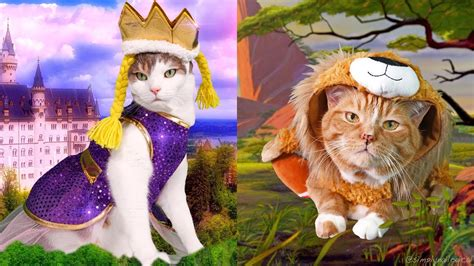 8 Ways To Dress Up Your Or Cat by Dressing Up My Cats In Holoween Costumes