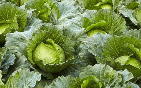 what soil for vegetable garden the best plants for clay soil grow in sun and