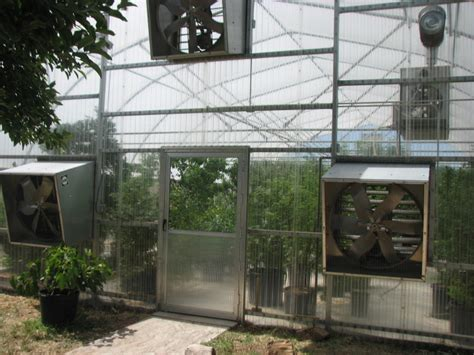 greenhouse fruit production  west texas dave wilson